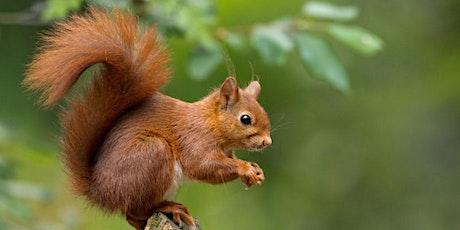 Squirrel Class - Parent Consultation Evening tickets