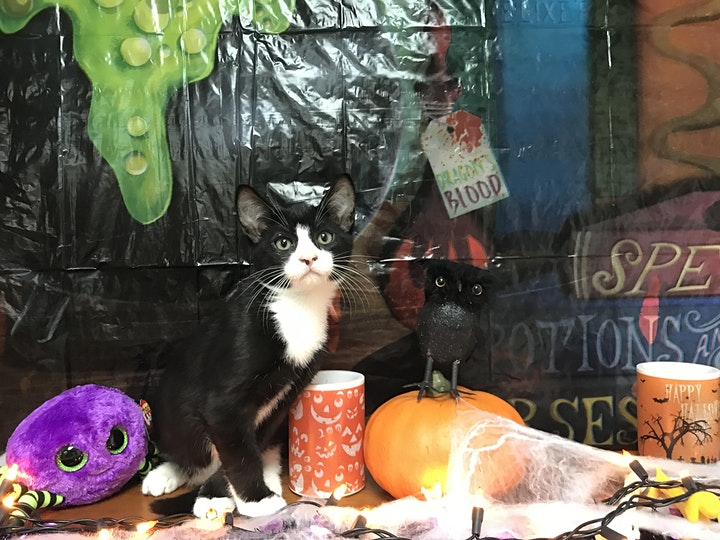 Virtual Bingo for the Animals - Spooky Edition image