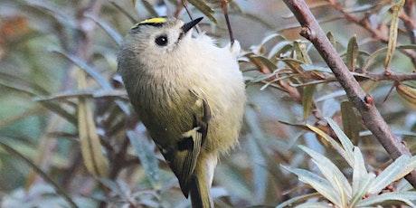 Green Gang: Autumn Family Birdwatching billets