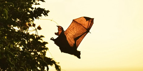 A Batty Dusk Adventure tickets