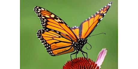Amazing Monarch-  Family Program, $4 per person upon arrival tickets