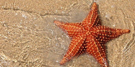Starfish Class - Parent Consultation Evening tickets
