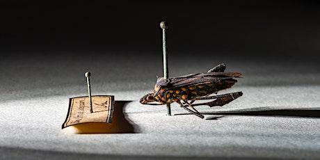 Hunterian Weekly Talk with Entomology Curator Jeanne Robinson tickets