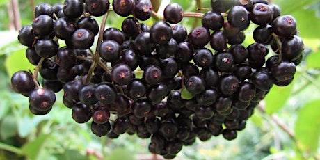 Elderberry Syrup Workshop tickets