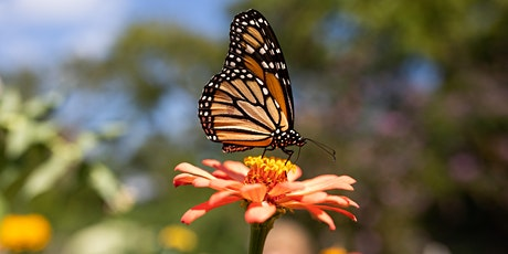 Attracting Wildlife and Pollinators to Your Garden tickets