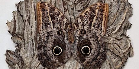 Giant Owl Eye Butterfly Pinning Workshop tickets