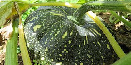 Growing Great Veggies the No Dig Gardening Way-Online Event tickets
