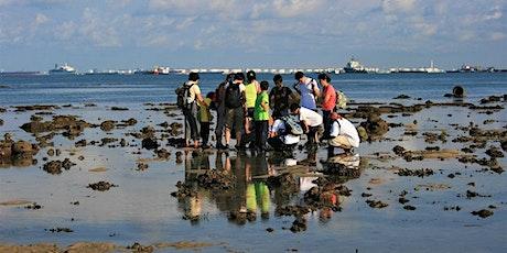 Get Your Feet Wet - Intertidal Walk at Pulau Hantu tickets