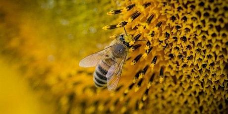 """Conferenza """"Il veleno delle api e le sue proprietà"""" biglietti"""