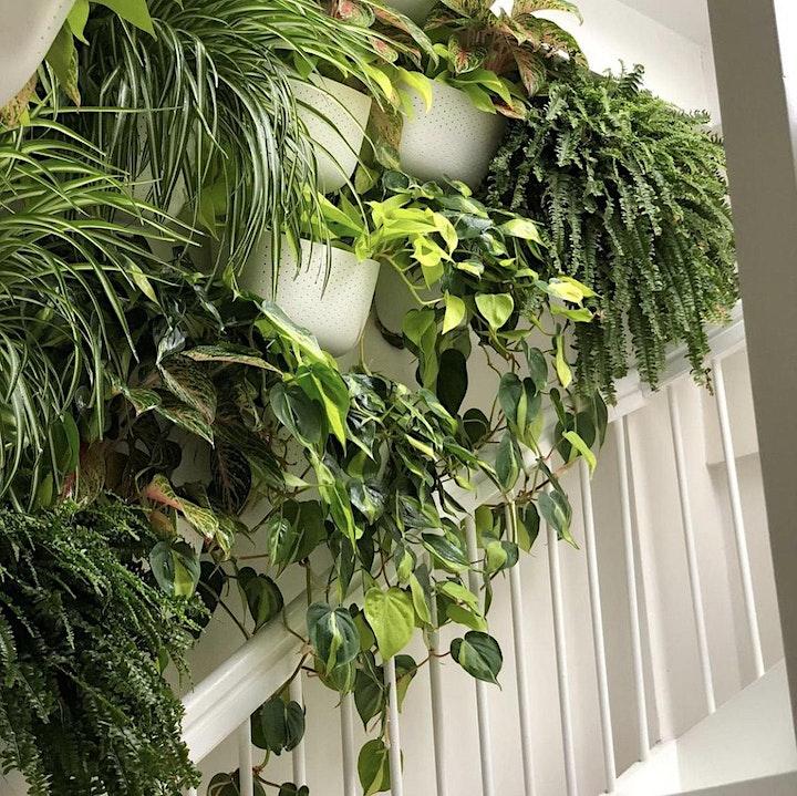 Living with Houseplants image