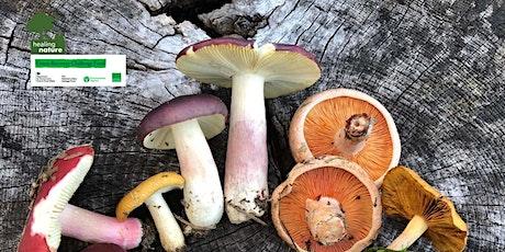 Fabulous Fungi Foray  - Healing Nature tickets