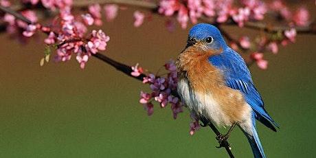 A Songbird in Your Garden - Zoom Workshop tickets
