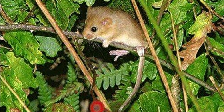 """""""Hedgerows and Wildlife - Reservoirs of Life"""" by Rob Wolton tickets"""