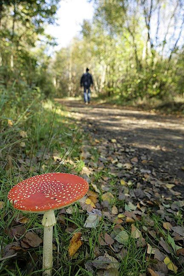 Fungi Foray at Dene Park image