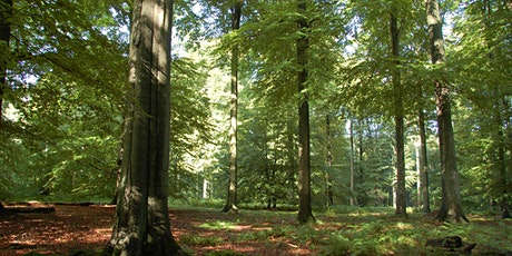 26km through the Zonienwoud (foret de soignes) on forest day! tickets