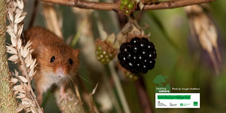 Hedgerow foraging in the north east - Healing Nature tickets