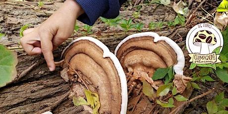 Atelier : Intro à la mycologie appliquée billets