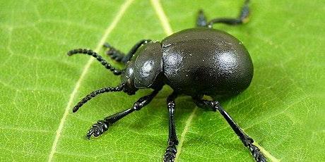 Beetles Class - Parent Consultation Evening tickets