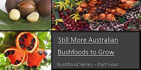 Still More Australian Bush Foods to Grow- Part 4 tickets