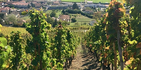 Vertical Limit: The Crus of the Northern Rhône tickets