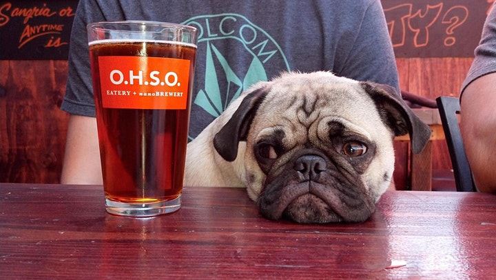 Tour O.H.S.O Brewery in Downtown Gilbert image