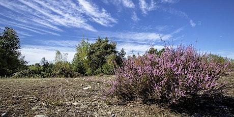 La gestione degli habitat di brughiera: conservazione e linee guida biglietti