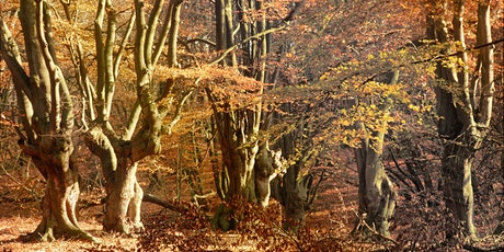 Autumn Photography Walk in Epping Forest tickets