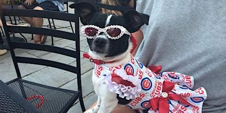 Harry's Halloween Dog Costume Contest tickets