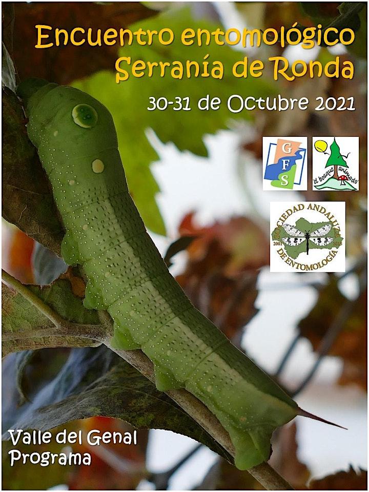 Imagen de Quedada entomológica Serranía de Ronda
