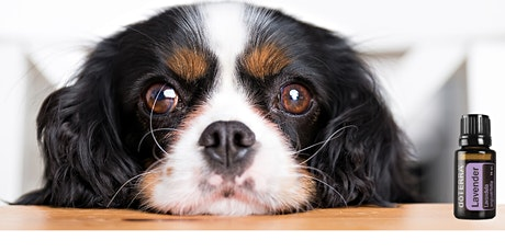 Pets & doTERRA Oils -  Boosting your Pets Immune Health tickets