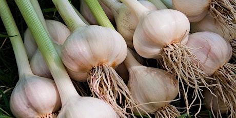 Growing Garlic tickets
