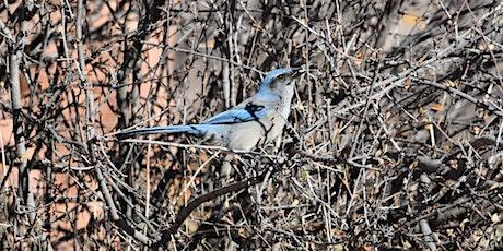 October Bird Walk at South Valley Park tickets