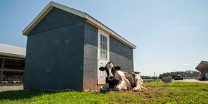Legal Issues in Animal Ag: Understanding the Recent...