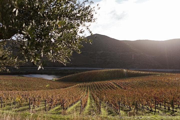 Vinhos de Portugal - Wine tasting / Masterclass image