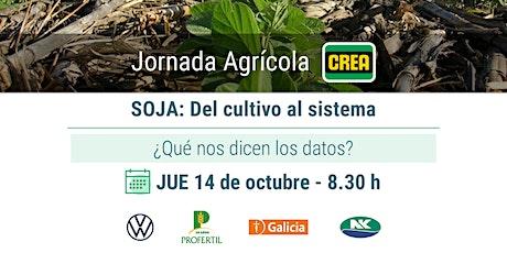 Jornada Agrícola | Soja: Del cultivo al sistema entradas