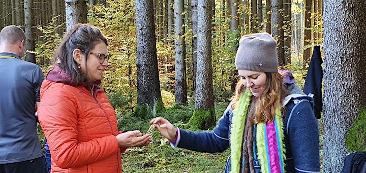 Waldbaden: Bild