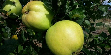 Apple Day tickets