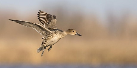 Waterfowl Photography: From the Duck's Eye View tickets