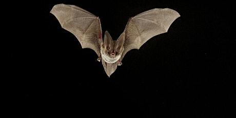 Roxborough Revealed: Bats tickets