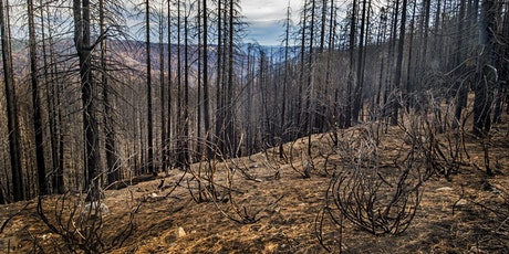 Natural and Prescribed Wildland Fire Impacts on Soil Health: BESR Fall 2021 tickets