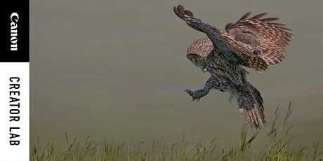 Wildlife & Action Photography - Chasing Decisive Moments tickets