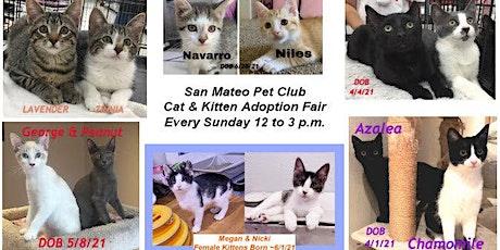 Kitties Galore! Kitten & Cat Adoption Fair - San Mateo Pet Club this Sunday tickets