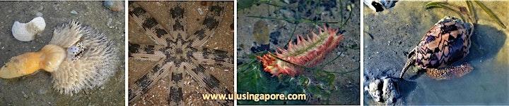Between Land & Sea - Intertidal Walk at Changi Beach image