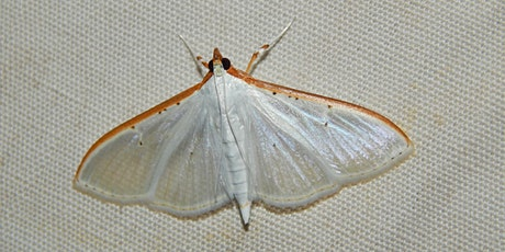 Moth Night 2021 -A Great Southern Bioblitz Project tickets