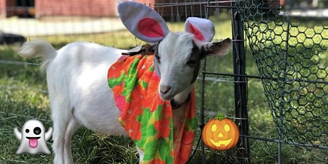 Teen and Adult Halloween Goat Yoga ages 13 and Up tickets