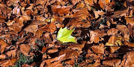Fall Plant Walk tickets