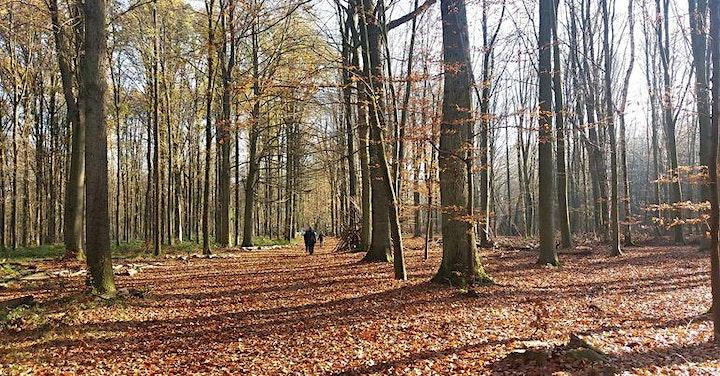 Afbeelding van Ateliers en forêt de Soignes de (re)connexion à soi et à la nature