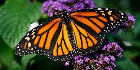 Learn to Create a Butterfly Garden tickets