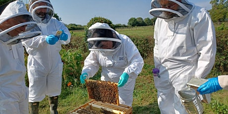 Budding Beekeeper! A beekeeping course by Wings & Radicles tickets