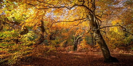 Fabulous autumnal photography tickets